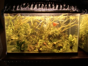 08152015 UPDATED TANK PICTURES 001