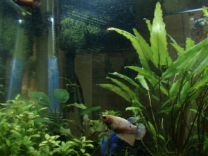 Fish Tanks IV 009