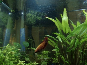Fish Tanks IV 010