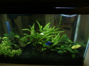 Fish Tanks IV 017