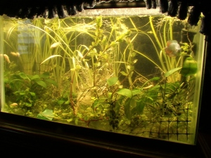 New Aquarium PLants 002