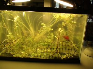 New Aquarium PLants 005