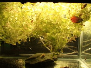 No Filters & Little Substrate PLANTS!!! 002