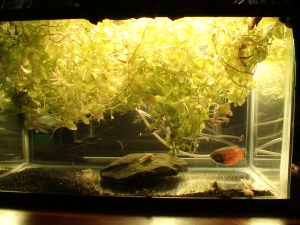 No Filters & Little Substrate PLANTS!!! 003