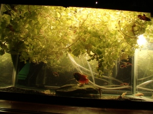 No Filters & Little Substrate PLANTS!!! 004